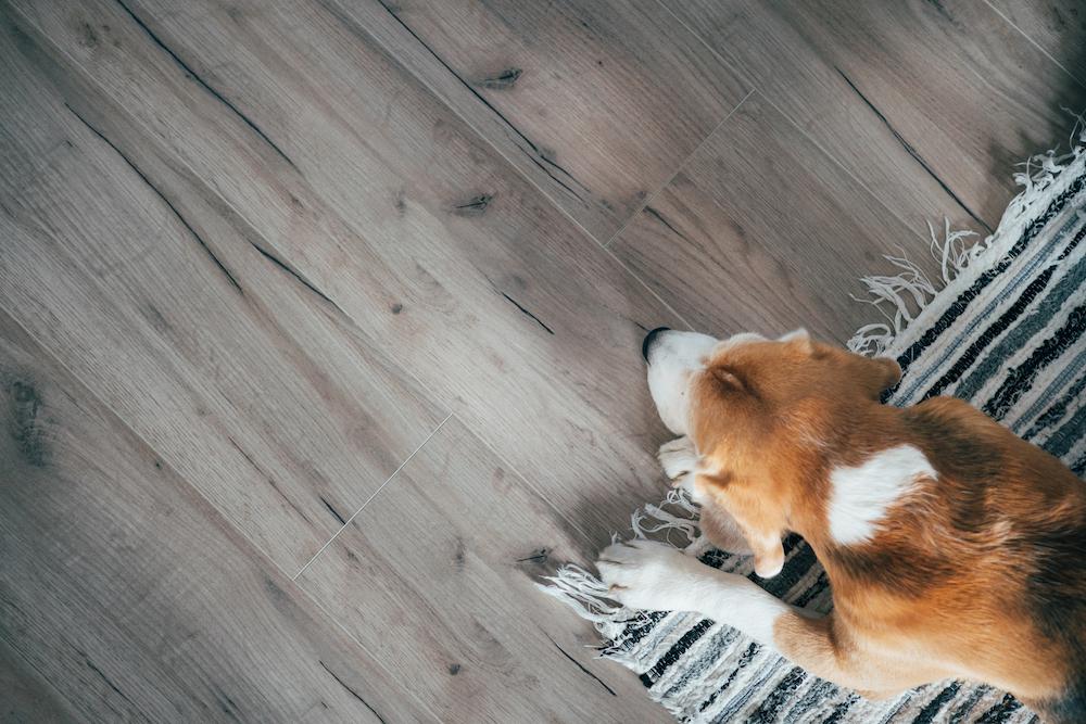 Carpet Giant, Best Vinyl Flooring For Dogs Uk